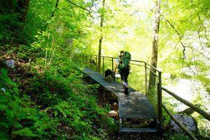 Mantrailing-Einsatzübung im Tennengebirge-über Stege